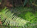Woodland ferns
